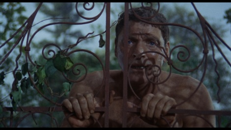theswimmer4
