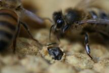 Mijn bijen