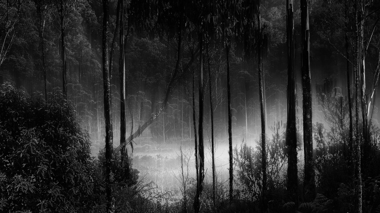 forest-963306_1920